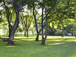 How to Grow Grass in a Shaded Area of your Lawn