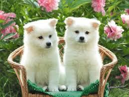 Cute Puppies Wallpaper