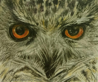 Owl Sketch in Coloured Pencils
