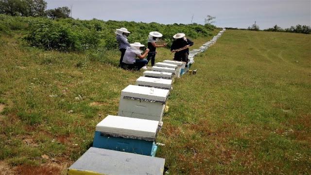 Δύσκολη χρονιά για τους μελισσοκόμους της Πελοποννήσου