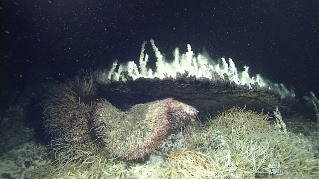 New study challenges prevailing theory about how deep-sea vents are colonized