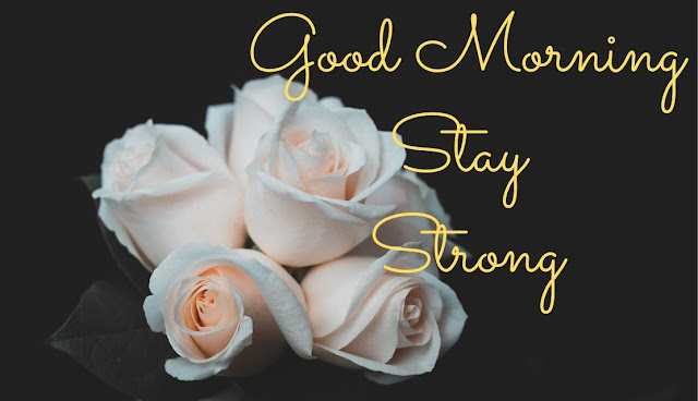 Good Morning Stay Strong white rose Image