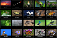 Photography Gallery: