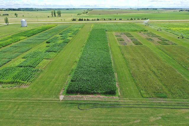 Rosholt Research Farm Minnesota central sands irrigation nitrogen