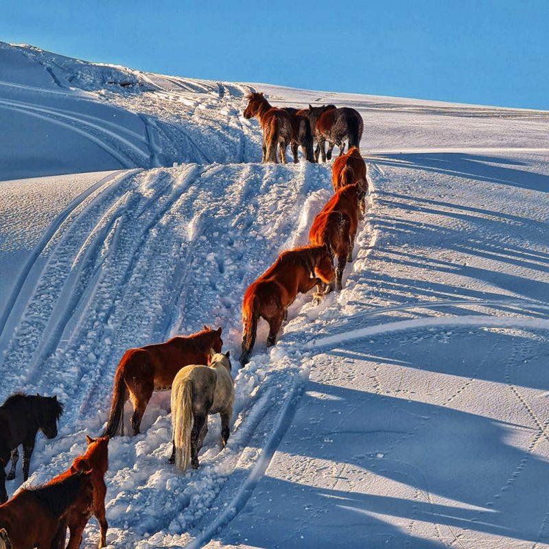 Pangal Andrade rescata caballos en la nieve