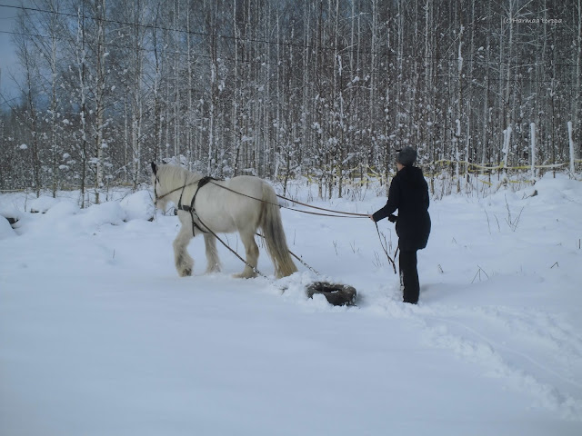 snow plowing with pony