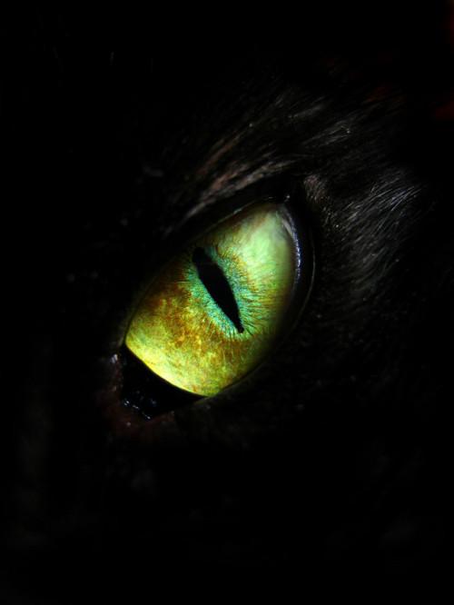 Ada Mata Di Balik Perigi