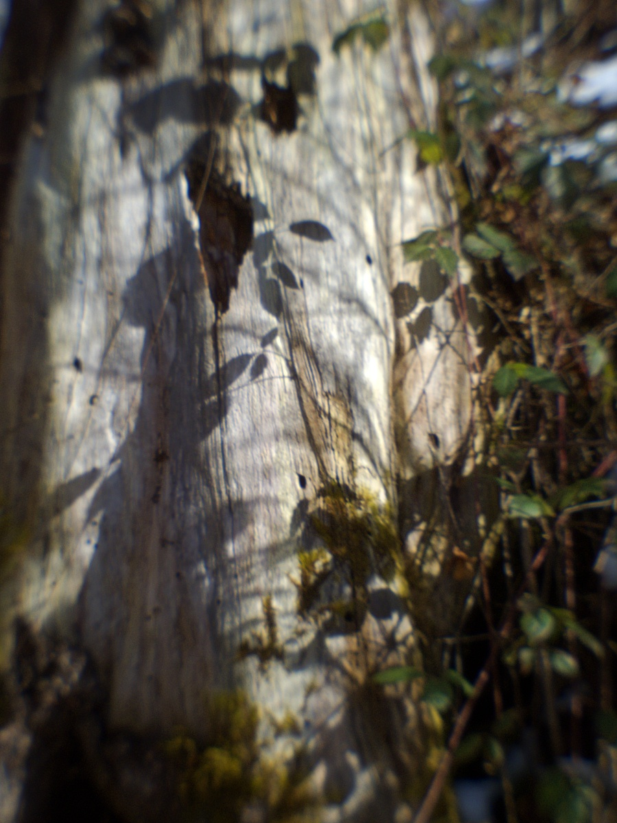 #311 Pentax 07 Mount Shield Lens f9 11.5mm – Erstes Kennenlernen (8)