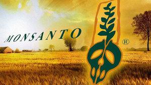La multinacional Monsanto sera