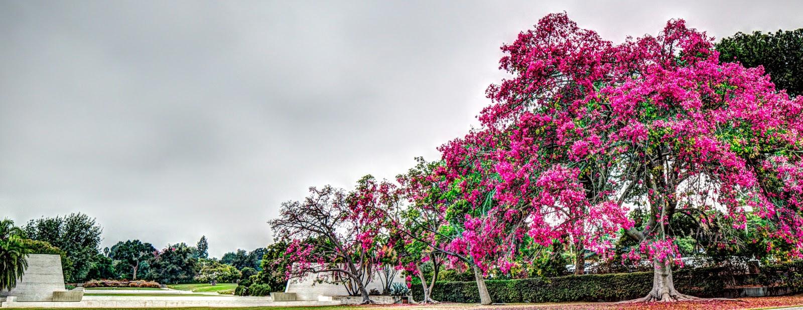 L A County Arboretum Botanic Garden Plant Info What 39 S