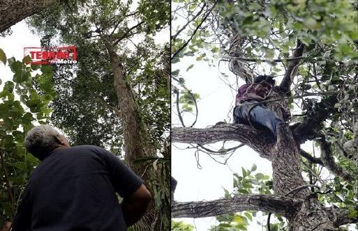 Tarzan Kemboja akhirnya mengalah