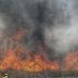Φωτιά στον Μαραθώνα! Στο σημείο ισχυρές δυνάμεις της Πυροσβεστικής