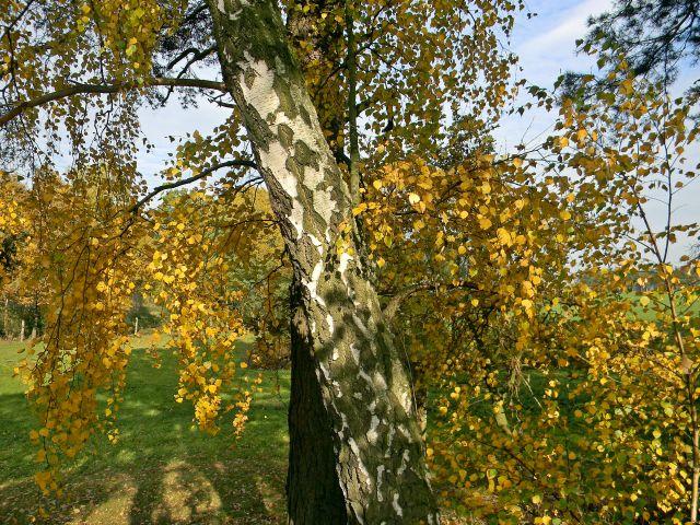 drzewa, las, pola, jesień, przyroda