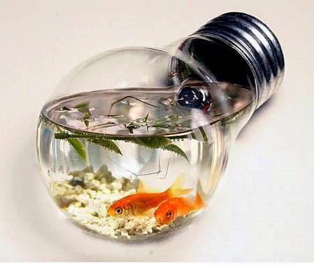 Cool betta fish tanks arts crafts ideas movement - Cool ideas for a fish tank ...