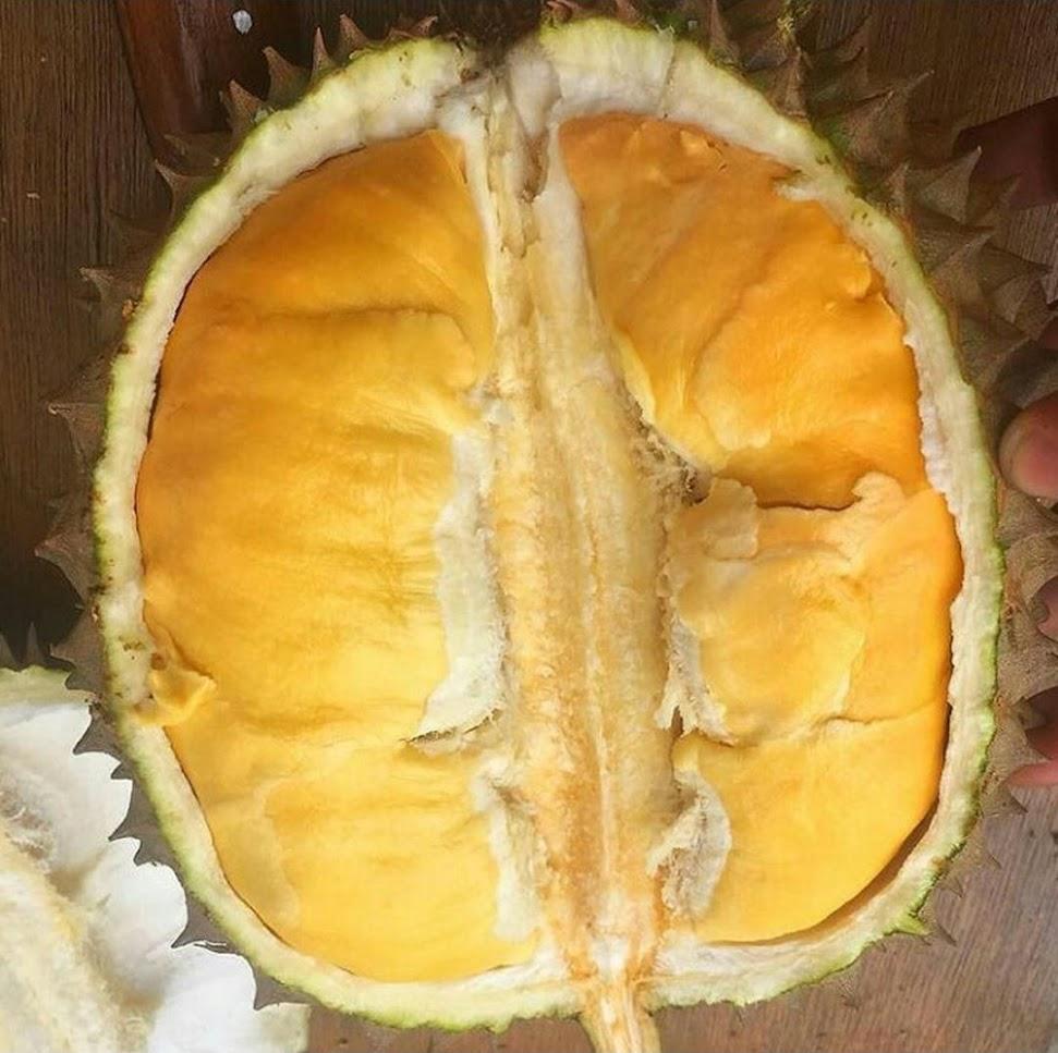 Bibit Durian Bawor Jawa Tengah