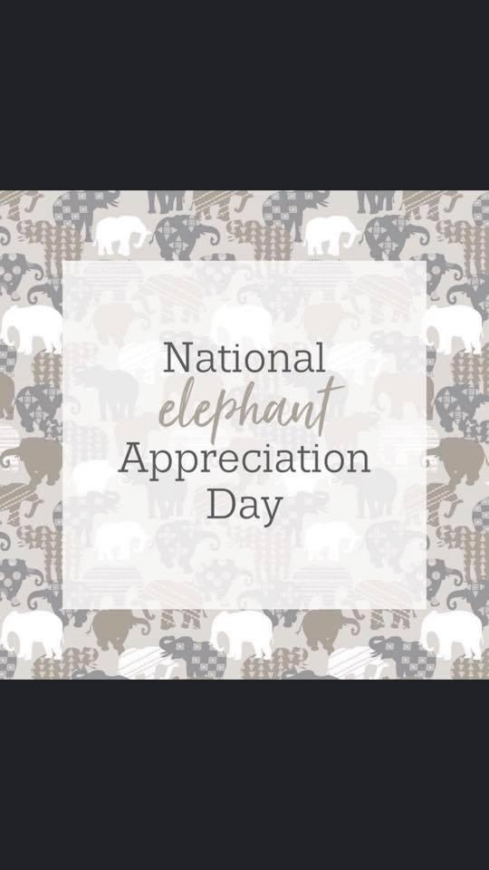 National Elephant Appreciation Day Wishes for Instagram