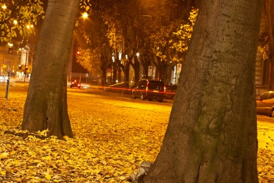 Picture of dry leaves and trees along a street