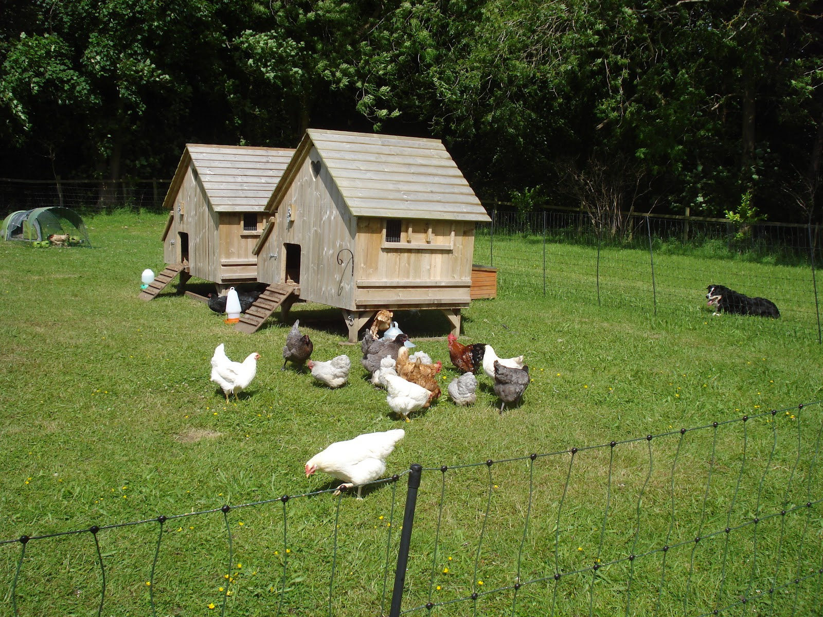 Our New Life In The Country Our Animals And Their Spaces
