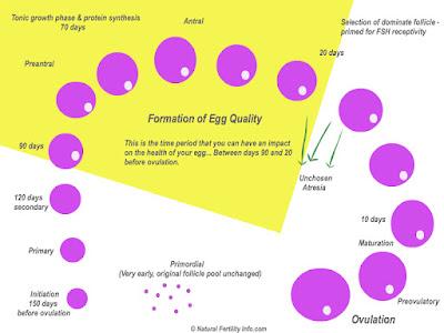 Cara Meningkatkan Kualitas Sel Telur Wanita Selama 90 Hari