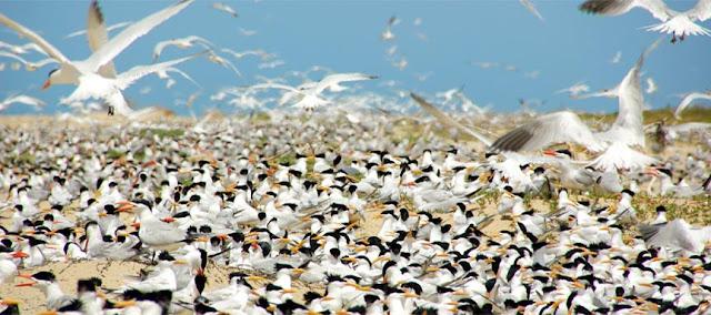 Le Parc National du Delta du Saloum :Tourisme, visite, réserve, île, oiseaux, Delta, Sine, Saloum, protection, environnement, nature, savane, marigot, mangrove, lagune, écosystème, LEUKSENEGAL, Dakar, Sénégal, Afrique