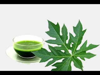 papaya leaf is good remedy to avoid infections in rainy season
