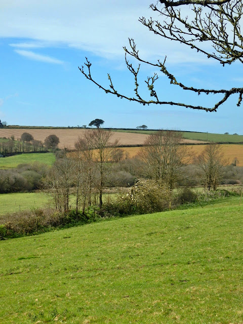 Countryside and green fields at Trerice House, Cornwall