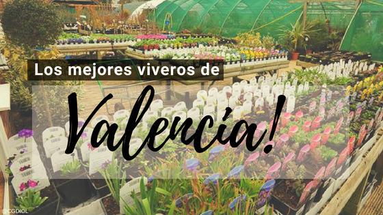 Comprar plantas online en Valencia