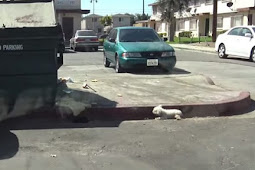 Poor Dog Was Ignored On The Side Of The Street For Whole Day
