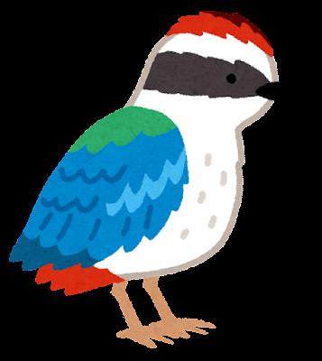 ヤイロチョウのイラスト(鳥)