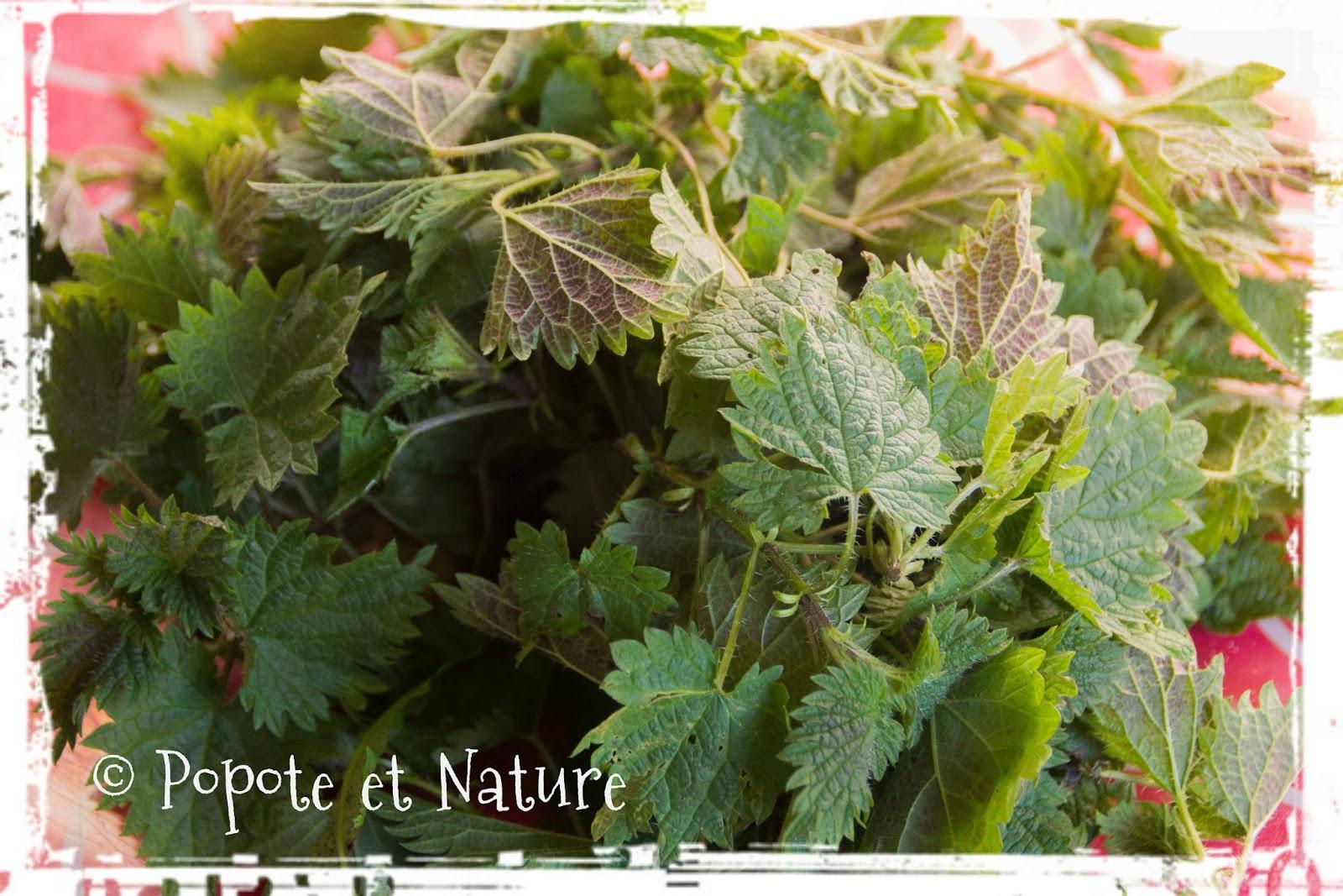 Popote et nature soupe aux orties - Quelles orties pour la soupe ...