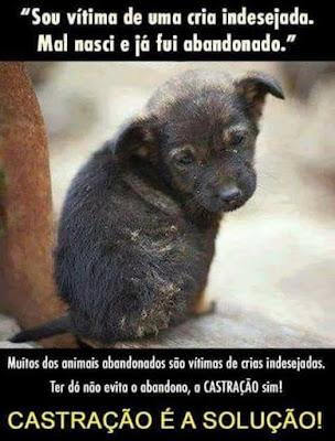 GPA com inscrições abertas para a campanha de castração de cães e gatos dos dias 2 e 3 de setembro