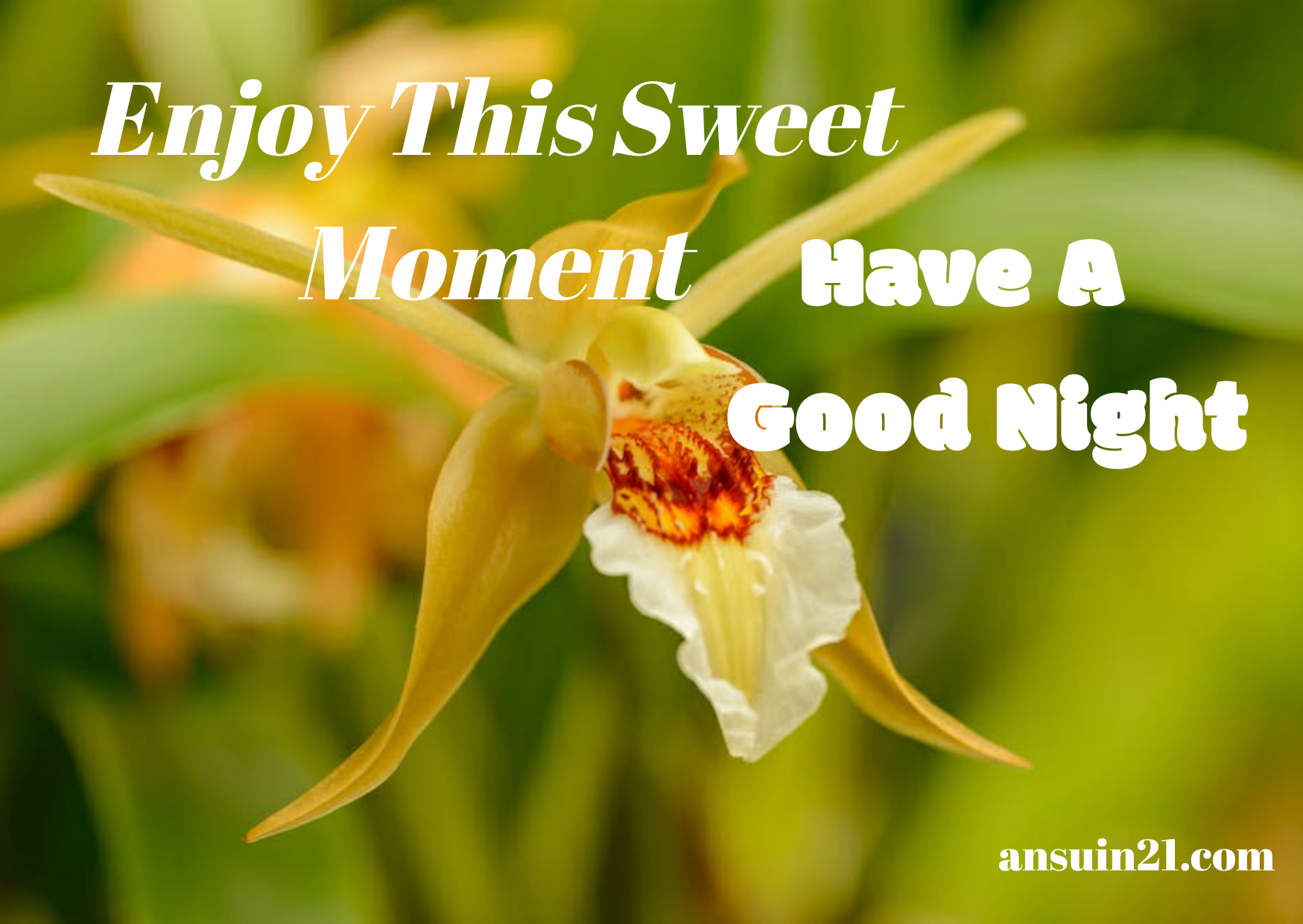 Good Night Images, Status, Wishes, Massage In English