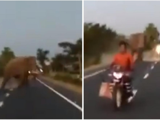 Motorist impatient to cross road nearly gets hit by raging Elephant