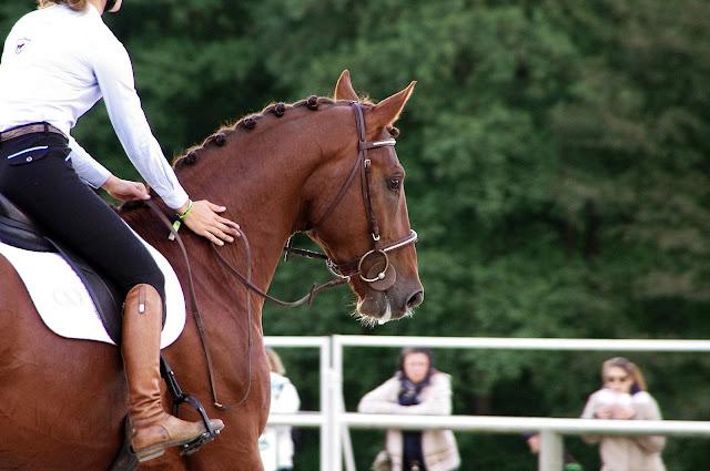 cavalière caressant son cheval