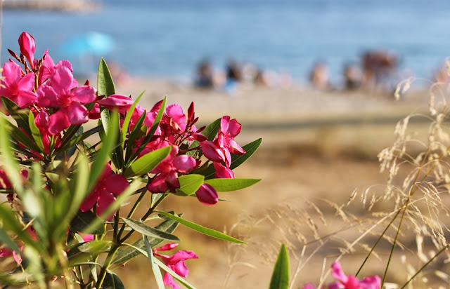 betty manousos beach and pink laurel flowers