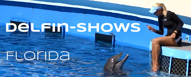 Delfin Shows in Florida