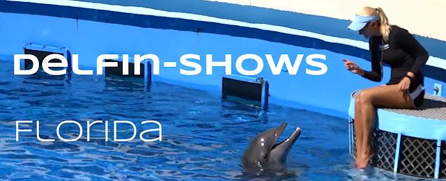 Delfin Shows in Florida