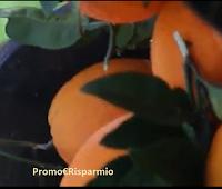Vinci gratis una cassa da 20 kg di Arance Bio