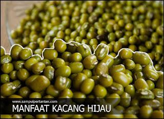 7 Manfaat Kacang hijau (Vigna radiata) yang terlewatkan