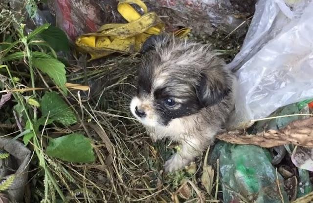 Кроха-щенок потерял маму и жалобно скулил, но всем было плевать
