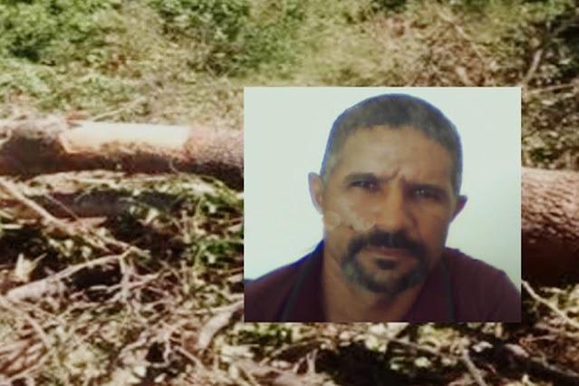 Trabalhador morre ao ser atingido por árvore durante derrubada