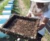Τοπ πατέντες μελισσοκόμων για Ξεχειμώνιασμα