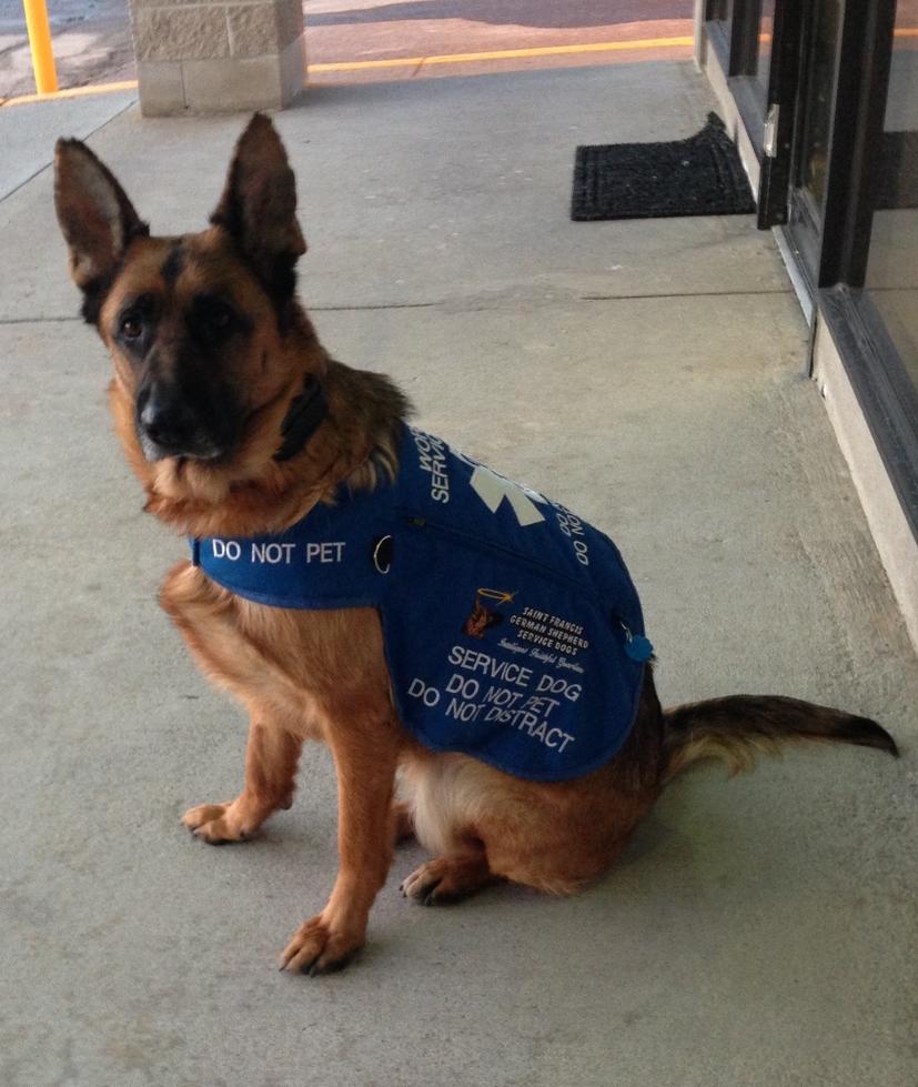 Kelleys dog blog real vs fake service dogs fake service dogs 1betcityfo Images