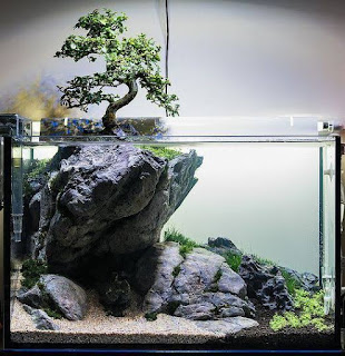 Substrate kayu dan batu untuk aquascape
