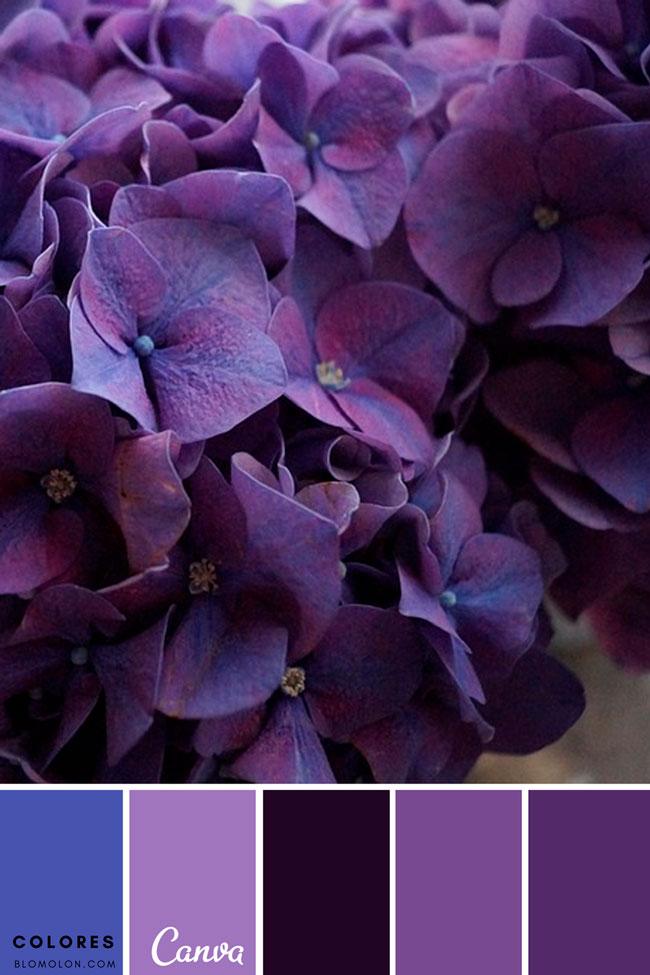 paletas_de_colores_mes_de_agosto_4