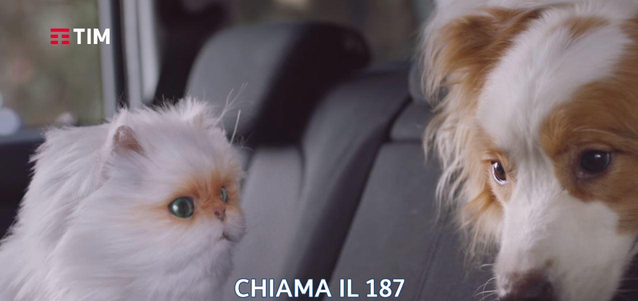 Canzone TIM Smart con gatto e cane Pubblicità