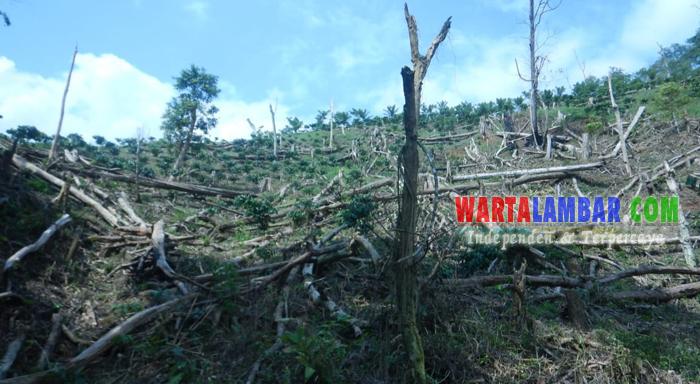 Petugas TNBBS Temukan 1 Ha Hutan di Suoh Dirambah