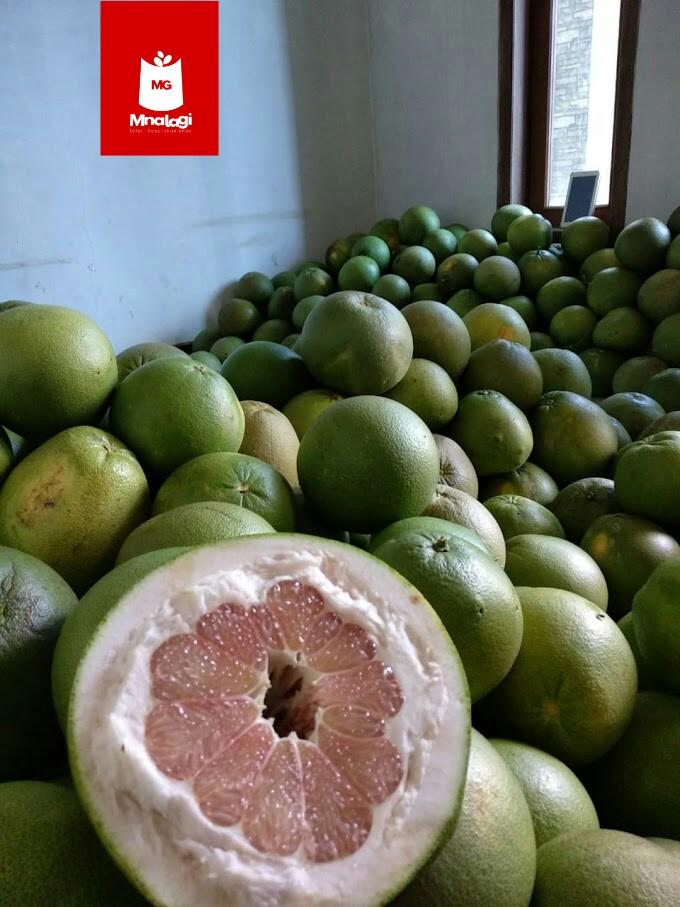 Buahnya yang kemerahan manis asam seperti madu   Jeruk pamelo dijual dengan harga 30.000/kilo