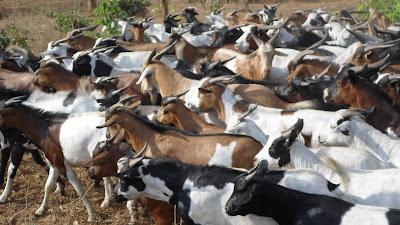 SAM 2164%2B %2BCopy - Ufugaji katika shamba la Rushu Ranchi Kisarawe