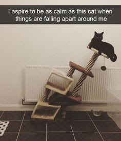 I aspire to be as calm as this cat when things are falling apart around me.